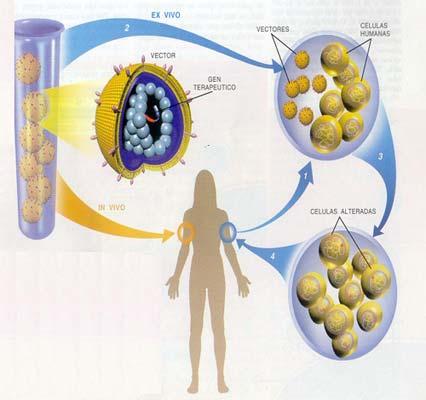 los microorganismos en la medicina: